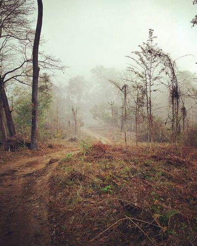 Roads Untravelled Forest Ways Road Picoftheday Wayanad