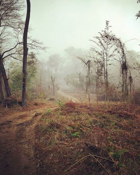 Roads Untravelled Forest Ways Road Picoftheday Wayanad