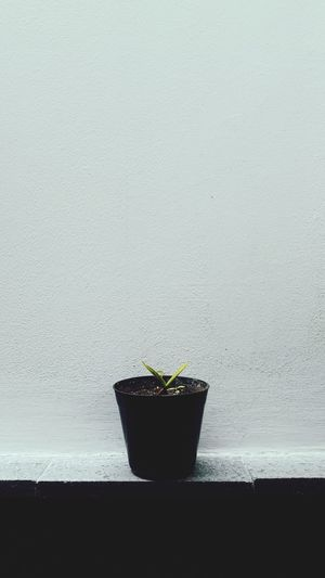 His name is George Potted Plant First Eyeem Photo