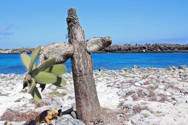 Driftwood on rock by sea against clear blue sky