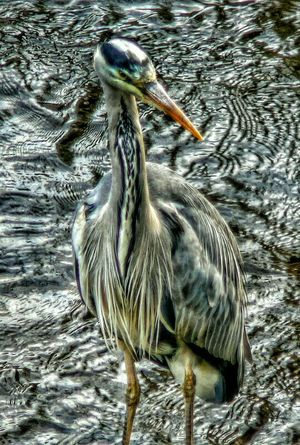 Wildlife Birds Celbridge Waterscape Hanging Out Check This Out Nature Water Reflections Water Reflection Riverside