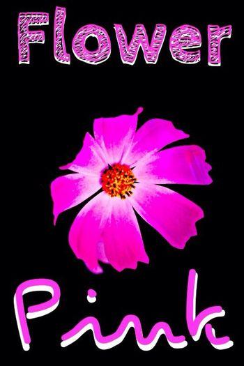 Flowers Flower Pink Enjoying Life