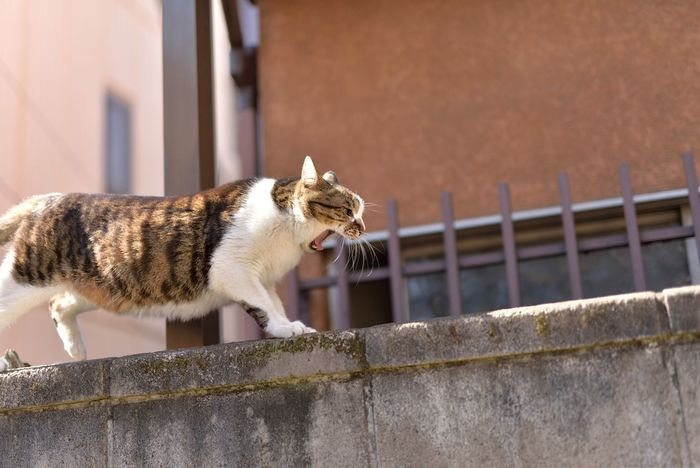 Cat Cats Cat♡ Animal Hello World Relaxing Enjoying Life Street Streetphotography Cityscapes From My Point Of View Cute Snapshot Snapshots Of Life EyeEm Best Edits EyeEm Best Shots Eye4photography  Showcase March Nikon Nikonphotography Sigma50mm1.4Art Japan Tokyo Meow