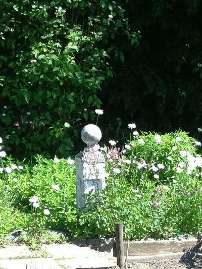 View of flowering plants in yard