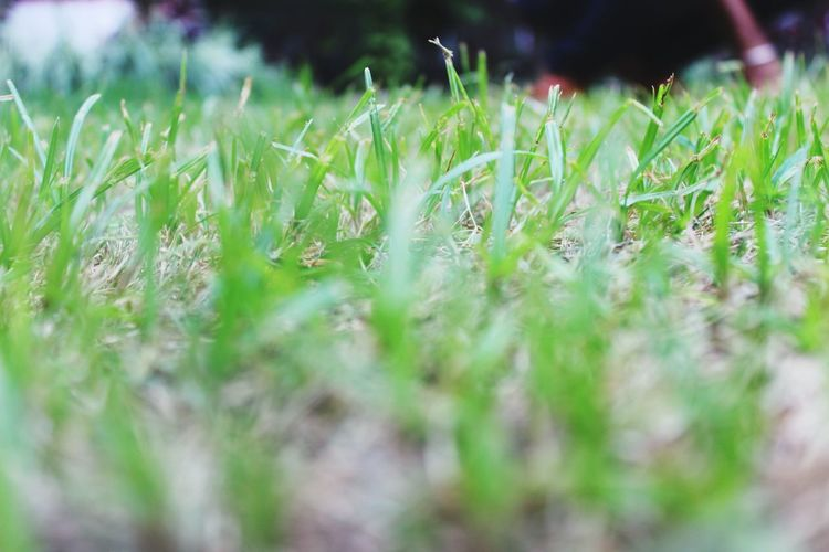 Nature No People Grass Outdoors Growth Close-up Day Beauty In Nature Freshness Photography Photography Themes Dslrphotography Photo♡ Photography Is My Escape From Reality! Photographic Memory