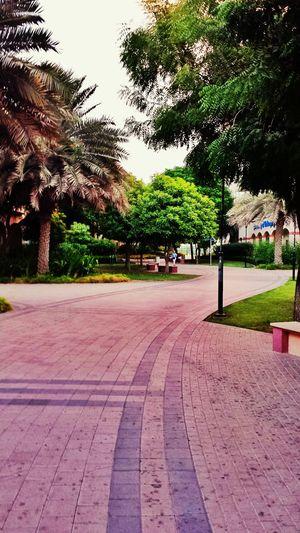Dubai Park Knowledge Village Weather Tree Greenery Outdoors Parks No People Building Exterior Memories