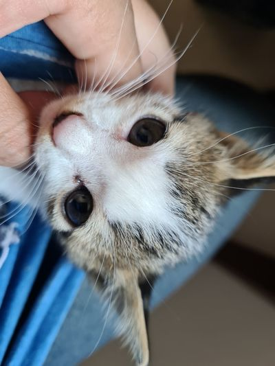 Close-up of hand holding cat