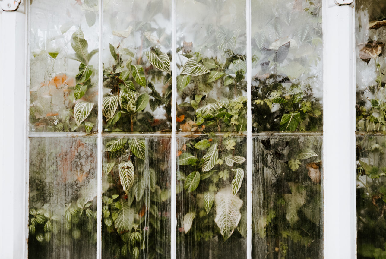 Plants seen through glass window