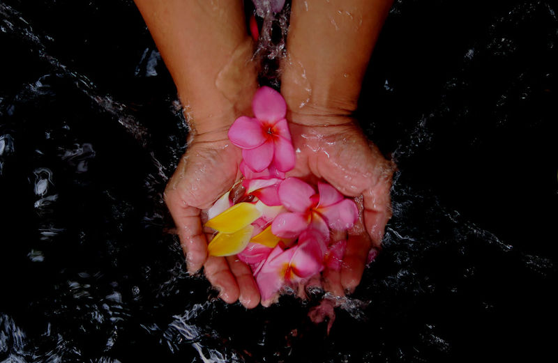 Directly above shot of cropped hands frangipanis in water