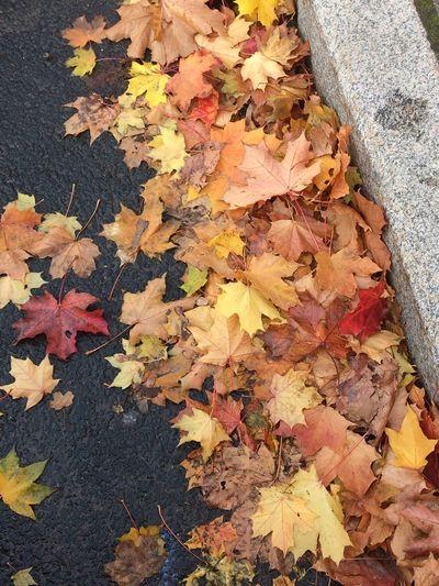 Осенние листья Листьянаасфальте осенниелистья листья желтые Autumn Change High Angle View Leaf Plant Part No People Nature