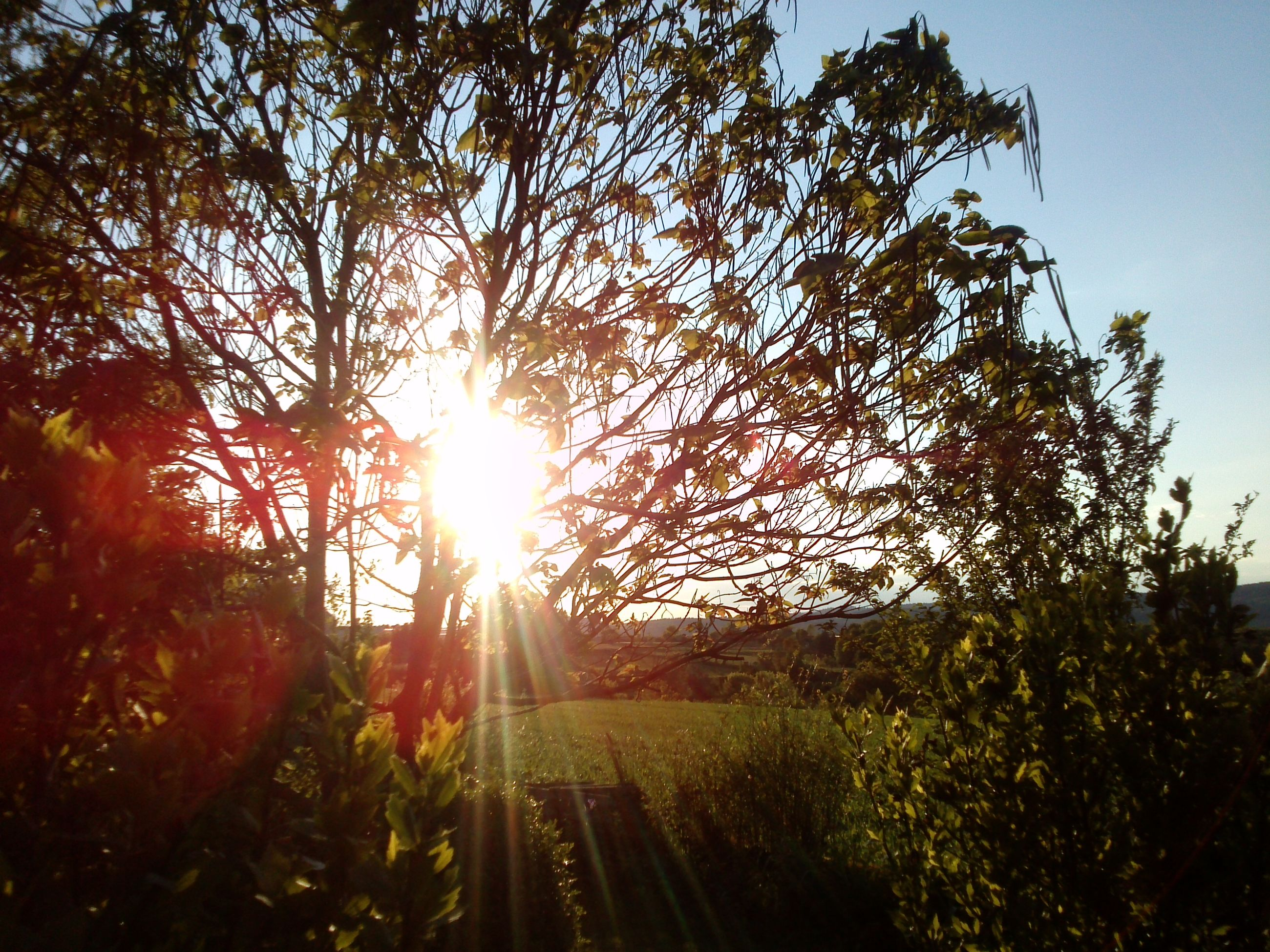 sun, tree, sunbeam, sunlight, lens flare, transportation, tranquility, sunset, nature, growth, the way forward, tranquil scene, landscape, beauty in nature, sky, scenics, diminishing perspective, road, sunny, vanishing point