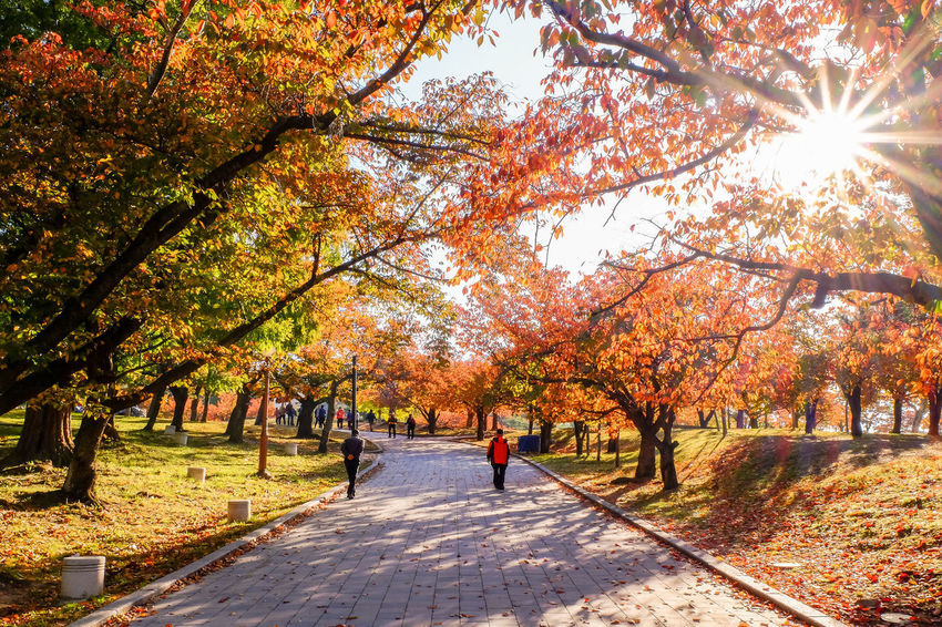 People visit Bulguksa Temple World Heritage on autumn day with colorful trees surrounding the site. ASIA Ancient Architecture Beatiful Entrance Geongju Korea Autumn Beauty In Nature Buddhism Bulguksa Change Color Colorful Cultural Destination Heritage Leaf Nature Pathway Travel Destinations Tree Unesco World