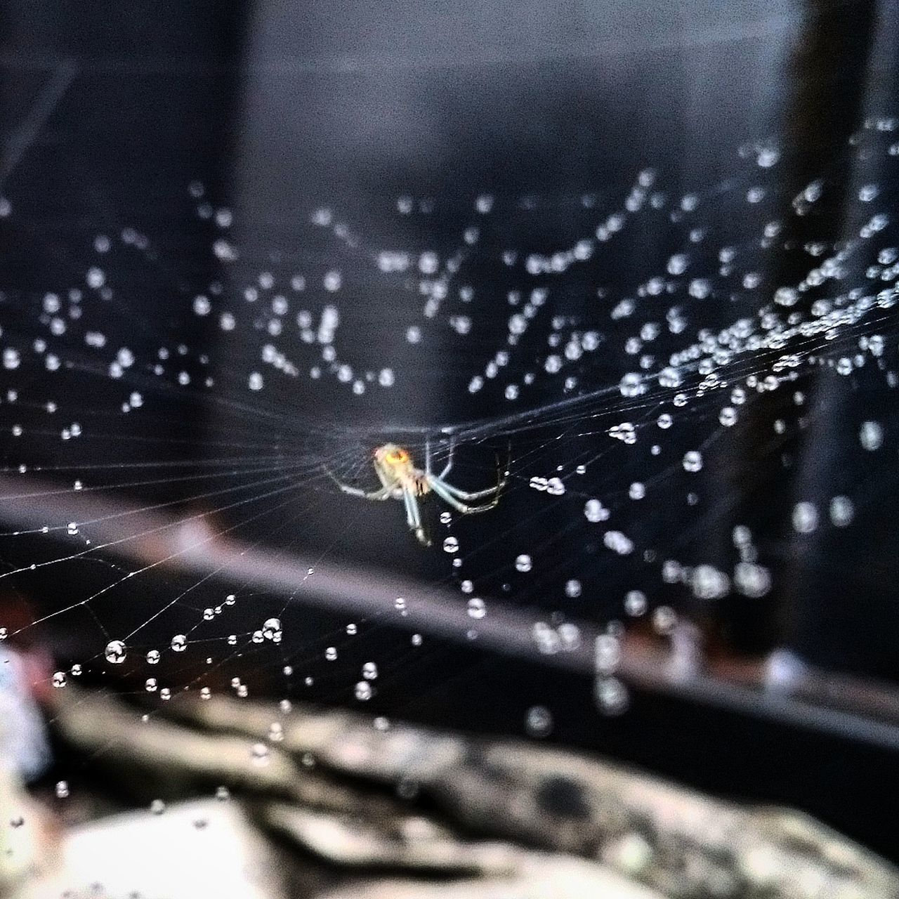 spider web, spider, one animal, web, animal themes, focus on foreground, survival, insect, animals in the wild, close-up, no people, nature, outdoors, day, animal wildlife, animal leg, fragility