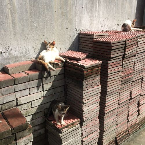 Kitty party Best Furry Friend Furry Purrfect Purr Shadows & Lights Shadow Philippines Rizal Antipolo Cupang Daydreaming Day Kittens Of Eyeem Kitten Relaxing Beauty In Nature By Standers Let's Waste Our Time Bricks And Stones Kitty Party Cats Of EyeEm Cats Cat Kitty