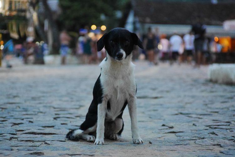 Portrait of dog on street in city