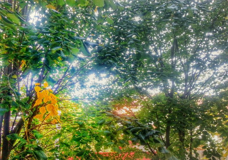 Autumn spark