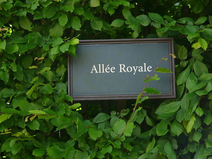 Allée Royale Green Green Color Green Leaves Leaf Plant Plat Sign Versailles