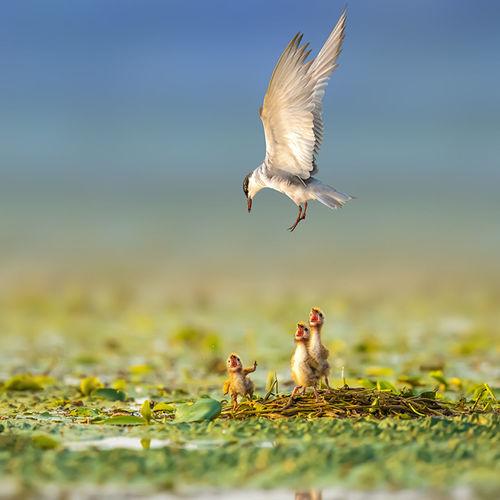 《选择》摄于高邮湖 Bird