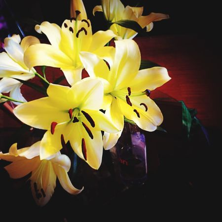 Lilies Lily yellowlily