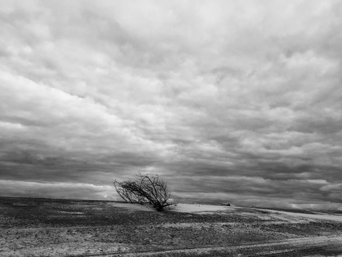 Landscape Tranquility Tranquil Scene Nature Beauty In Nature Sky Scenics Black And White Cape Lookout National Seashore Outer Banks, NC Beach Dramatic Sky Outdoors Lone No People Day Tree
