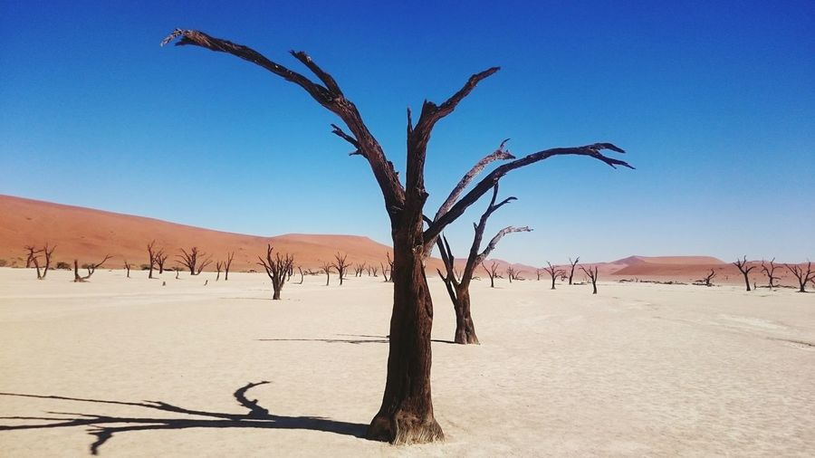 Nature Photography Nature Naturelovers Natural Beauty Nature_perfection Nature Reserve Beauty In Nature Namibia Dessert Simplicity No People No Water Tranquility Tranquil Scene Beautiful Nature Dead Plant Atmospheric Dried Wilted Plant Climate Dried Plant Extreme Terrain Arid Namib Desert