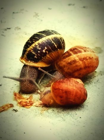 San Diego Snail Collection Snail🐌 Snails Having Fun Snails Snail Photography