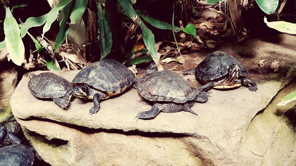 Hannover Zoohannover Schildkröte Schildkröten