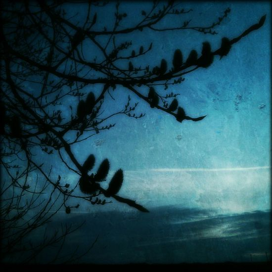 frühlingspuschel an blau Nature Enjoy The Silence Silent Moment Silhouette Tree Bluetastic Waiting For Spring Spring