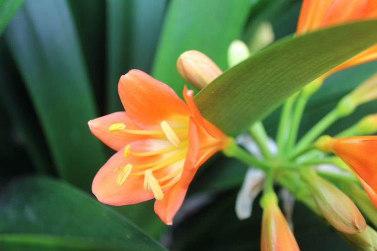 Flower Garden, Gangtok Beauty In Nature Blooming Close-up Day Day Lily Flower Flower Head Fragility Freshness Green Color Growth Leaf Nature No People Orange Color Outdoors Petal Plant