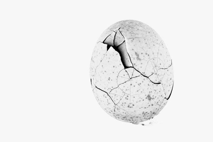 Crack Crackd Egg Cracks Crumpled Egg Eggshell Hoffi99 Minimalism Minimalistic Minimalistic Photography Studio Shot White Background