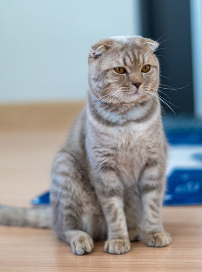 Cat looking away while sitting on table