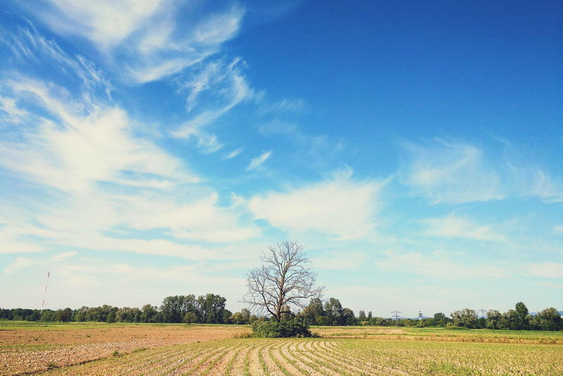 Ordinary day in Freiburg Agriculture Blue Cloud Cloud - Sky Field Landscape Nature Rural Scene Sky Color Of Life