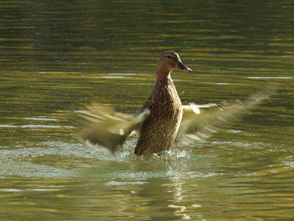 One Animal Animals In The Wild Animal Themes Water Bird Waterfront Animal Wildlife Lake Nature