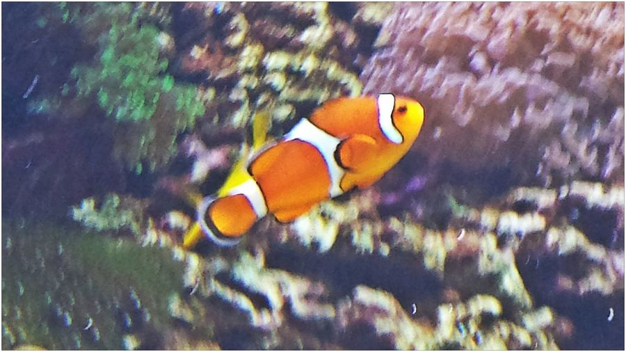 pesciolino .... Animal Instaanimal