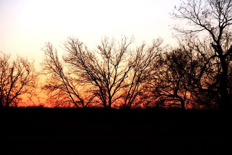 A new day. On The Road Sunrise Sunrise And Sunsets Shadows & Lights Tree Silhouette From Xmas Vacation Peace And Quiet Textures And Surfaces
