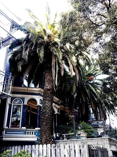 Streets Of San Francisco San Francisco San Francisco Architecture Palm Trees Palms California Dreaming California