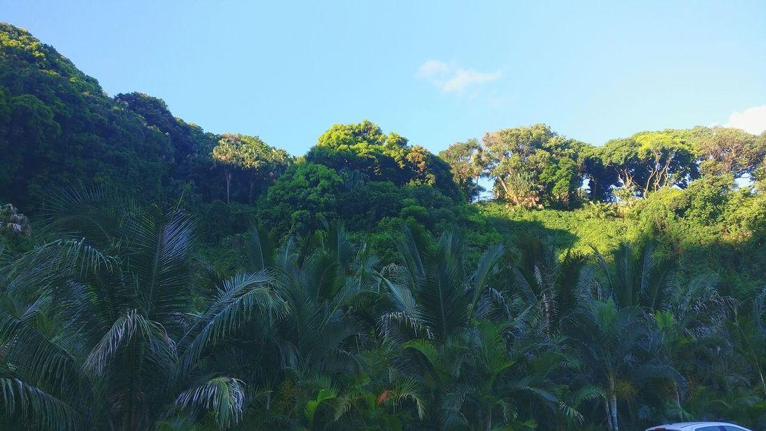 Sky Blue Tree Nature No People Beauty In Nature Landscape Outdoors Green Color Reunion Island La Réunion