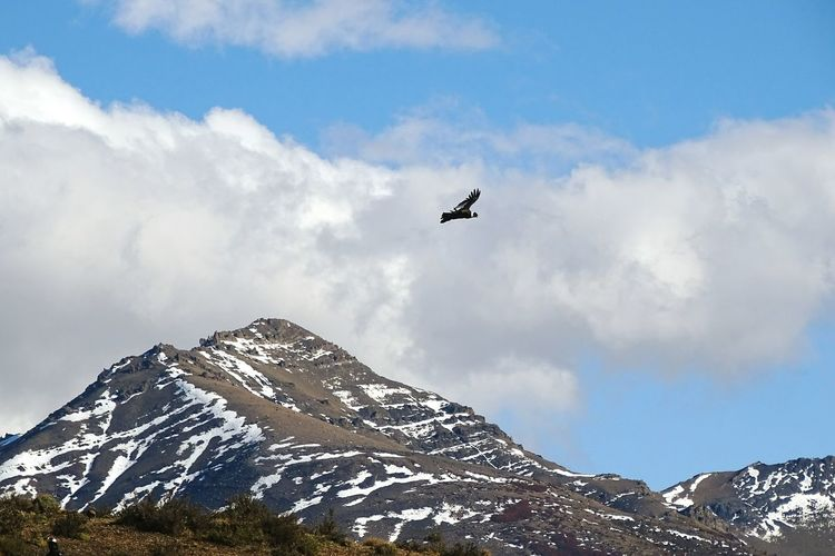 Bird flying over majestic snowcapped mountains at torres del paine national park