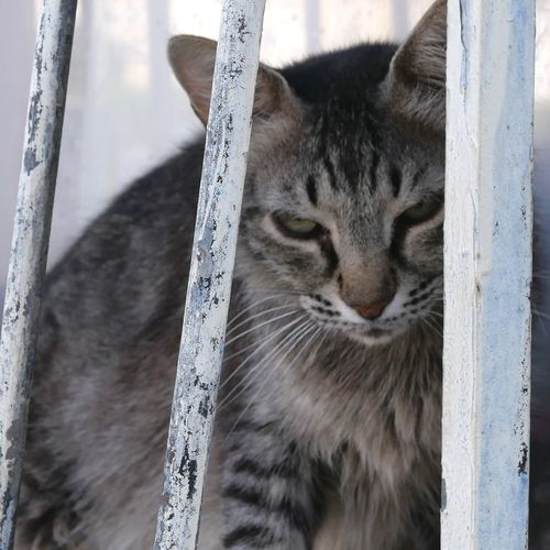 Animal In Captivity EyeEm Selects Mammal One Animal Animal Themes Cat Animal Pets Feline Domestic Cat Domestic Animals No People Close-up Resting Outdoors Eyes Closed  Day