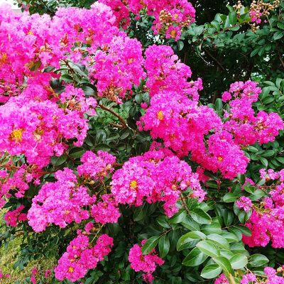 Summer pink flowers . Flower Growth Pink Color No People Full Frame Nature Outdoors Plant Backgrounds Day Beauty In Nature Fragility Freshness