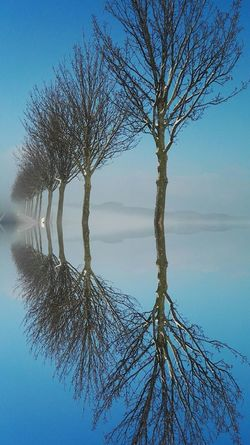 Tree of life Reflection No People Beauty In Nature Tree Nature Branch Sky Outdoors Growth Tranquility Day Close-up Sunset Water Single Tree Silent Nature Mystic View Hello World Winter Wonderland Blue Skies Winterwonderland Mysticlight Reflection_collection Mirror Reflection Hi