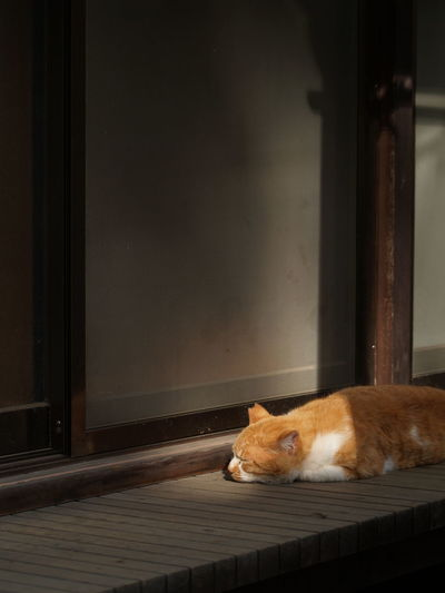 Sleeping... Animal Animal Themes At Home Cat Cat Lovers Chubby Domestic Animals Domestic Cat Feline Houses And Windows Japan Japanese  Laziness Light And Shadow Mammal No People One Animal Pets Relaxing Resting Shadow Sleeping Sleeping Cat Whisker Zoology