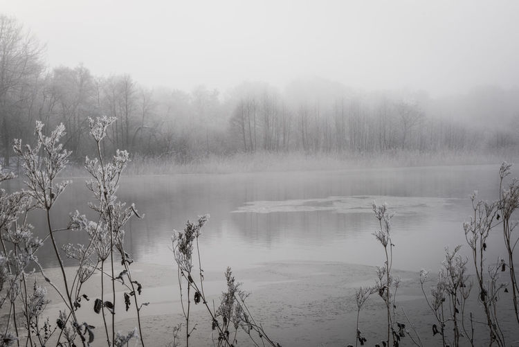 Shades Of Winter Ice Floe Misty Nature Winter Bare Tree Beauty In Nature Black And White Day Fog Foggy Lake Landscape Mist Monochrome Nature No People Outdoors River Scenics Sky Tranquil Scene Tranquility Tree Water