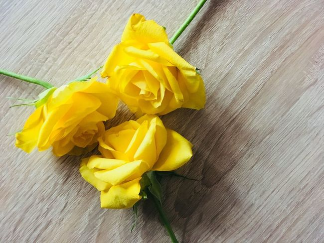 Yellow roses Roses Yellow Still Life High Angle View Table Indoors  No People Wood - Material Freshness Close-up Fragility Flower Day Flower Head
