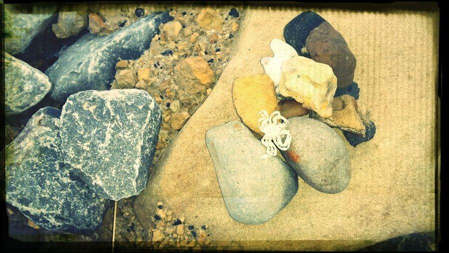 Crab Stones Beach Life