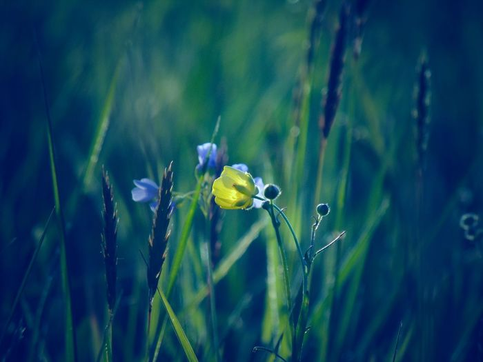 beauty. EyeEm Best Shots EyeEmNewHere EyeEm Nature Lover EyeEm Selects EyeEm Best Shots - Nature Beauty In Nature Seethroughmyeyes Follow Blindshot Viewpoint Flora Sunset Mood Blooming Springtime Flower Close-up Plant Blade Of Grass
