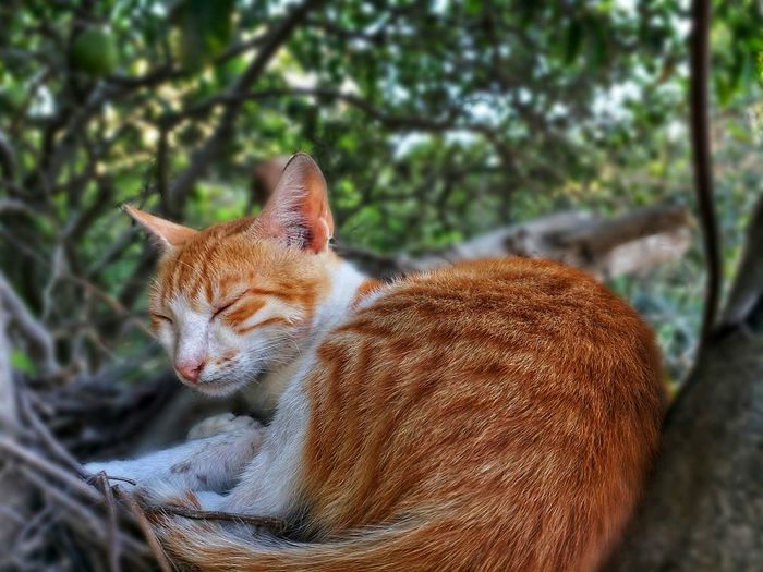 Close-up of cat resting on tree