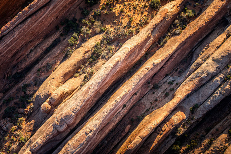 High angle view of wood in forest