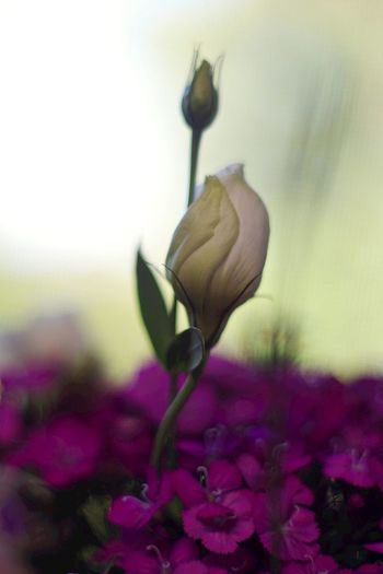 Rising above Flowers Macro Macro Beauty Still Life Industar61