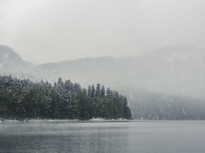 Scenic view of lake by trees during winter